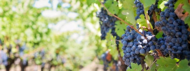 wijnreizen Languedoc