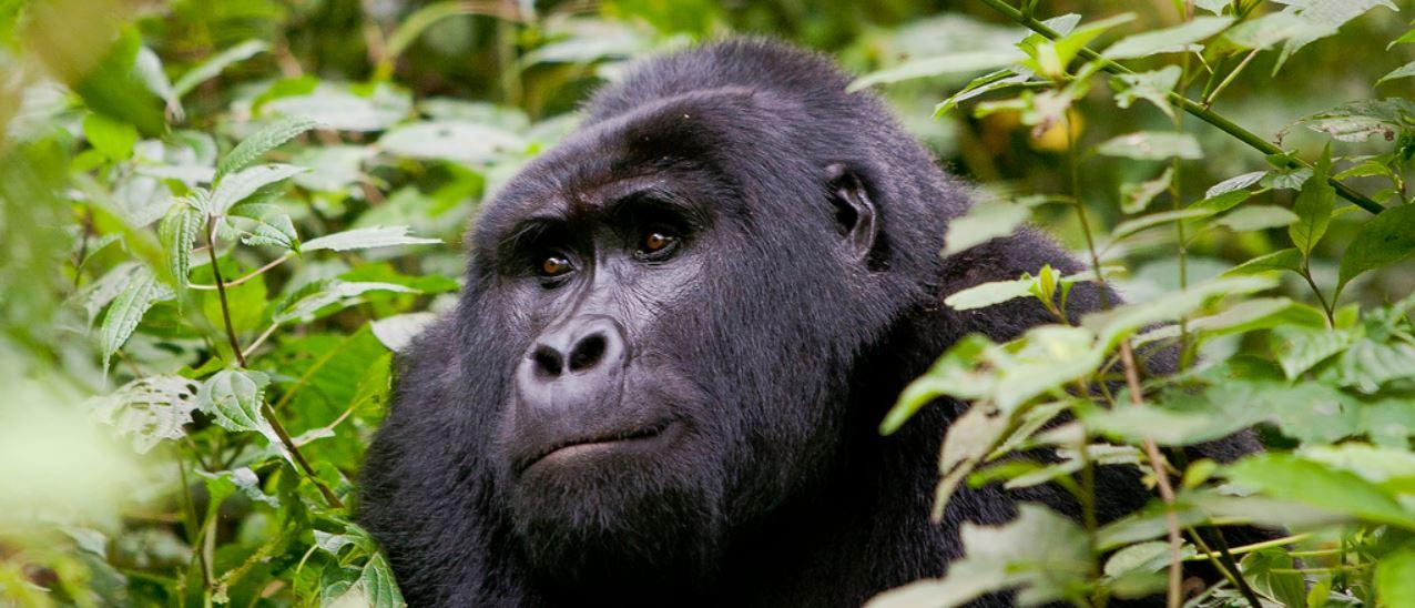 rondreis Oeganda