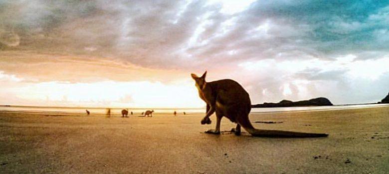 individuele reis Australie