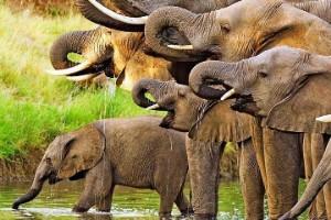 groepsreizen-botswana