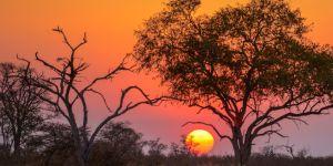 rondreisbotswana